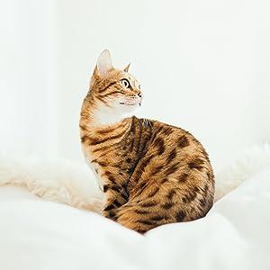 Munchiecat Cat Image