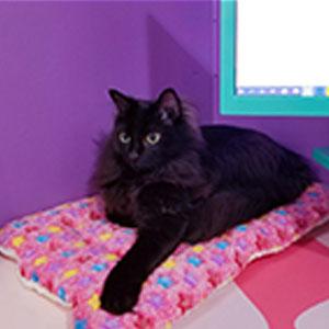 puppy cat bed