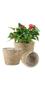 plant basket seagrass baskets plant pots indoor indoor plant pots indoor planter woven baskets