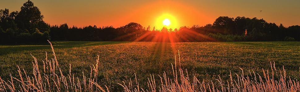 dawn sunrise over a meadow