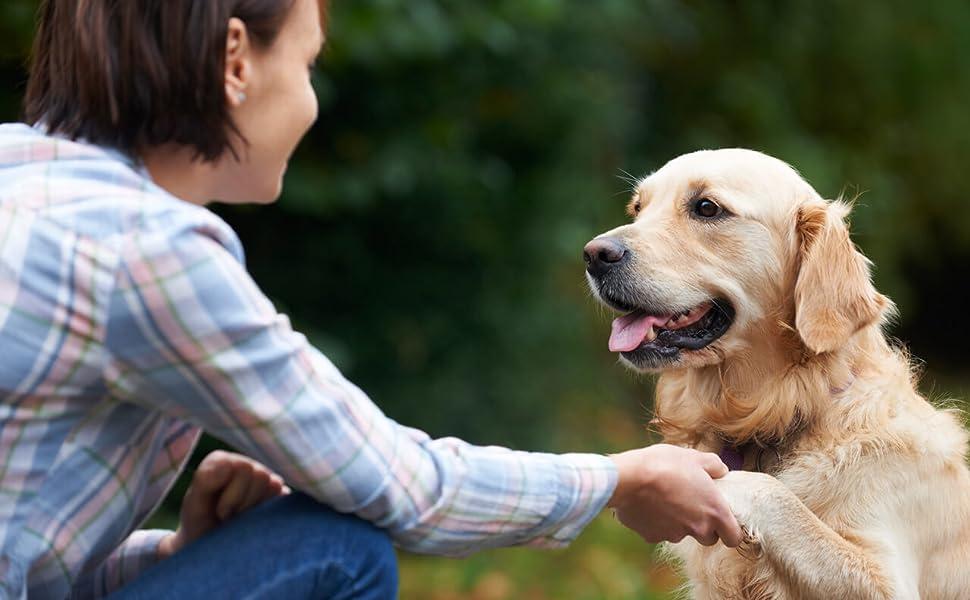 Arthrose Hund HD Hund Arthritis Unterstützung für ältere Hunde