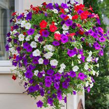 hanging basket soil, hanging plant soil, organic potting soil, annual container garden, organic soil