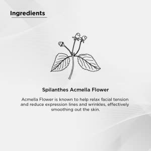 Spilanthes Acmella Flower