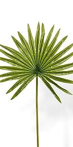Mini Fan Palm Leaf, Set of 12