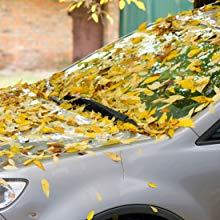 Fall Winter Summer Spring Leaves Leaf Falling Car Dust Dirt Dirty Clean Wash Windscreen Windshield