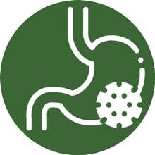 Prebiotics good gut bacteria