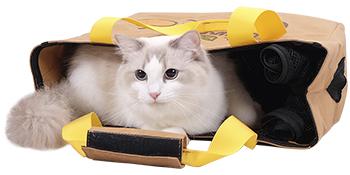 Paper kraft pet carrier