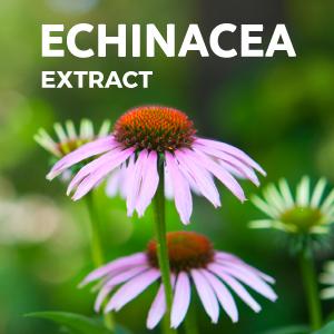 Echinacea Extract