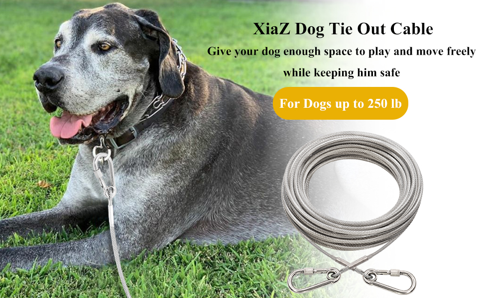 Dog runner Cable
