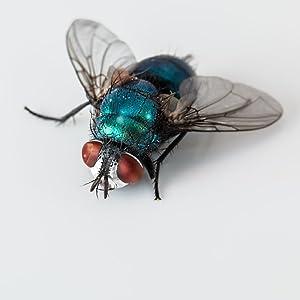 Xterminate fly zapper