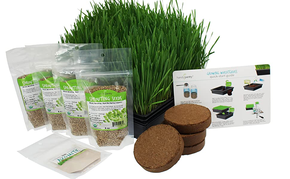 wheatgrass growing kit starter cat grass pet minute soil organic wheat sprouting seeds handy pantry