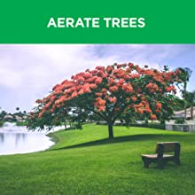 tree, aeration, aerate, hole, boring, growth
