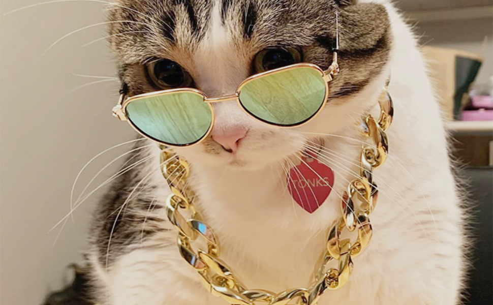 The cat wearing the sunglasses and pet necklace.