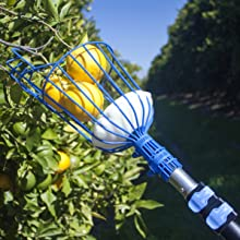 eversprout fruit picker with extension pole
