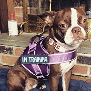 dog training weight vest
