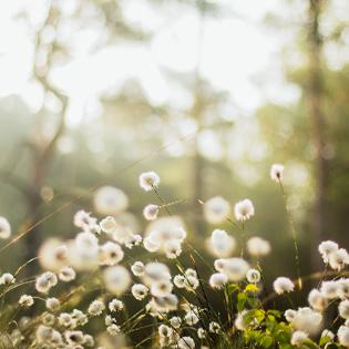 Flower Nexon Botanics
