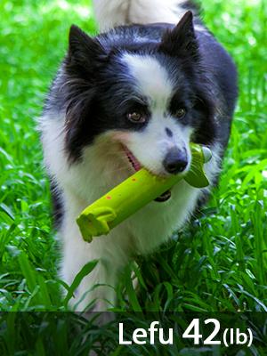 medium dogs toys