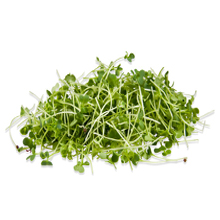 Microgreens Arugula