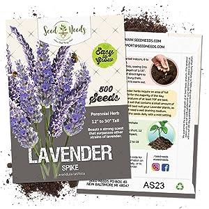 spike lavender seeds for planting