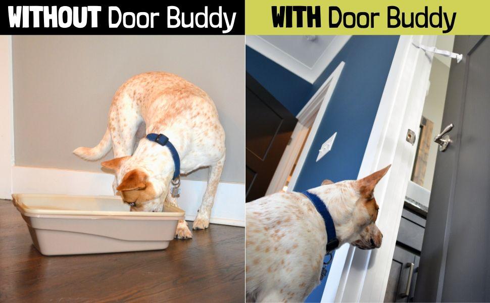interior cat door alternative to stop dog eating cat poop
