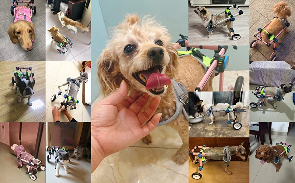 HobeyHove  All the design and manufacture are for the pets in need of care and love