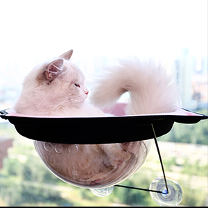 safety cat window bed