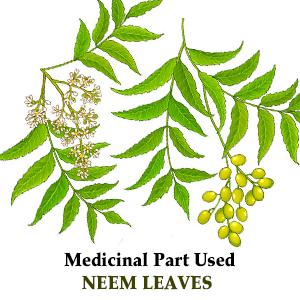 Herbal Hills Neem Capsule Neem Leaf Azadirachta Indica Blood Purification Skin Care Pills Neem Pills
