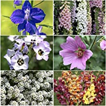 Bird & Butterfly Attracting Wildflower Seeds For Planting