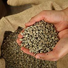 estratto di chicco di caffè verde puro 1200mg