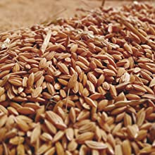Fermented Rice Extract