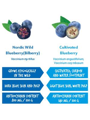 blueberries bilberries cultivated berries
