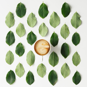 Leaf with creamy cup of coffee