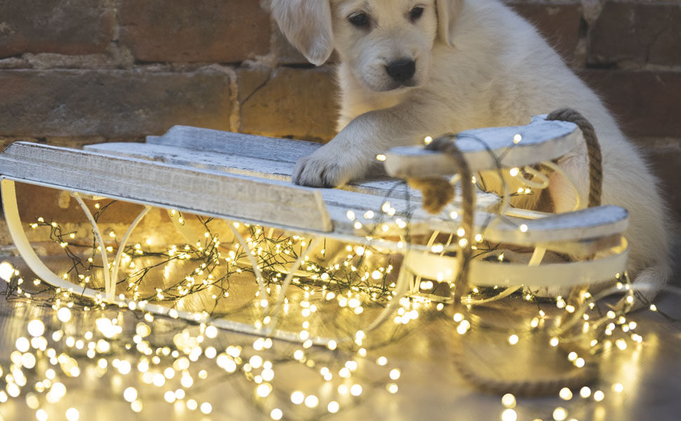 Bezaubernde LED Lichterkette von FairyTrees