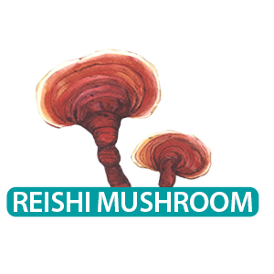 reshi mushroom for lung health