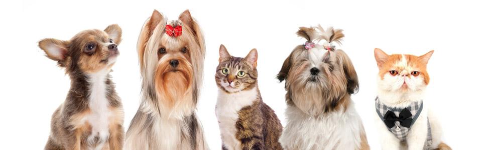 puppy doggie yorkie shih tzu chihauhua cats kitten