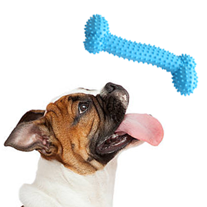 Free teeth cleaning dog bone