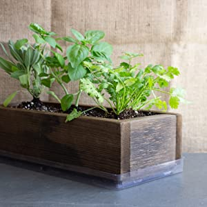 barnwood culinary herb kit seeds