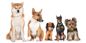 Hundetrainingsleine