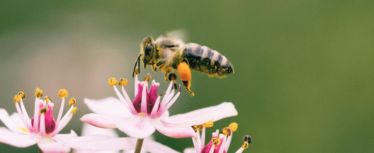 La naturaleza puede crecer libremente en todas las propiedades. Esto hace felices a las abejas
