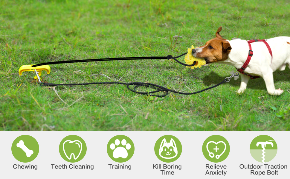 dog yard leash and stake