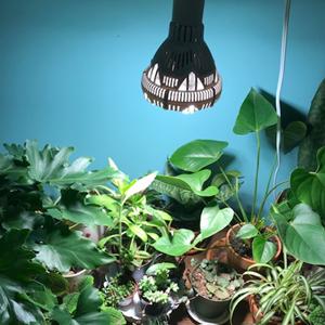 växtlampor för inomhusväxter växer ljus för inomhusväxter