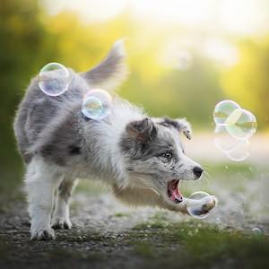 bacon bubbles