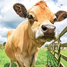 natural force vanilla organic whey protein is sourced from heritage breed a2 jersey cows
