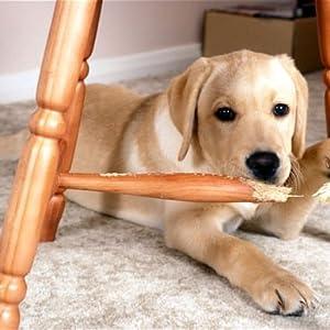 dog chew table