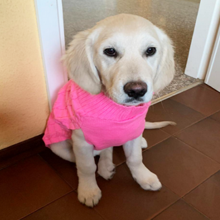 einfarbiger Hundepullover