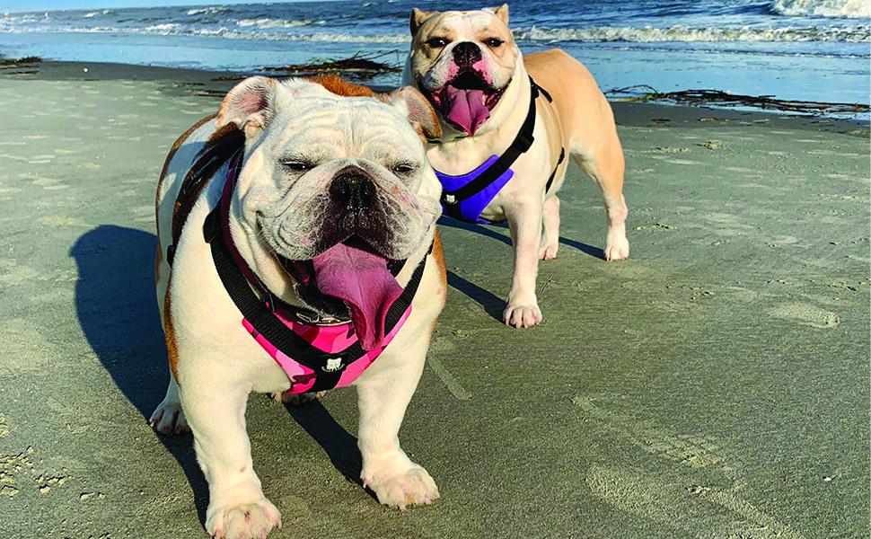 Bulldog Grade Bulldog Harness