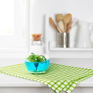 plant parent green thumb venus flytrap fly trap kitchen