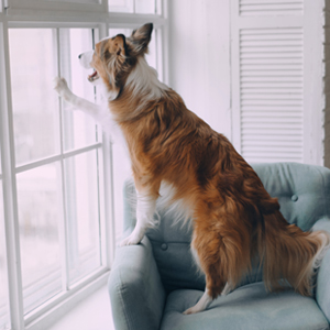 Treats fear and anxiety in dogs