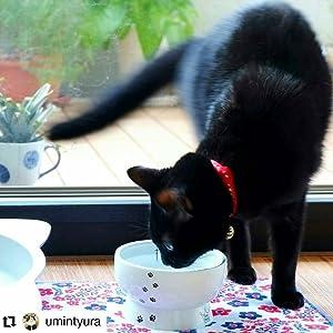 猫 猫壱 ハッピーダイニング 脚付フードボウル 脚付ウォーターボウル シンプル 可愛い 老猫 子猫 ドライフード ウェットフード 陶器 磁器 安定感 滑り止め 脚付食器