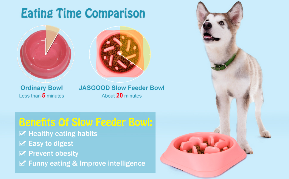 slow eat good health bowl for puppy and medium dogs